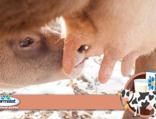 Conoscere i diversi tipi di latte animale